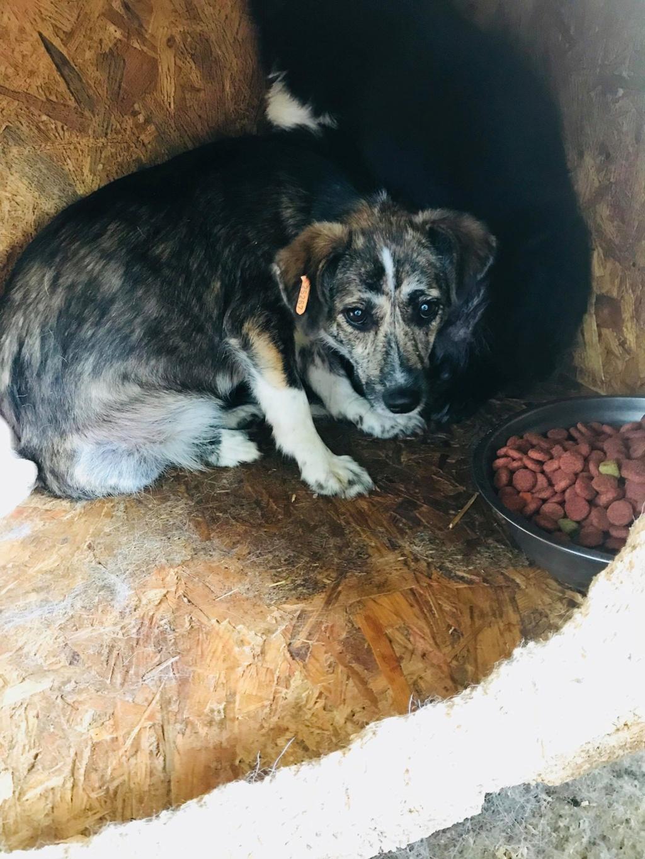 Nutela - chienne femelle - refuge de Târgu Frumos - en famille d'accueil dans le 68 36263110