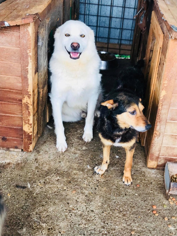 Tango et Foxtrot - mâle - refuge de Târgu Frumos - adoptés via Andreea 36274410
