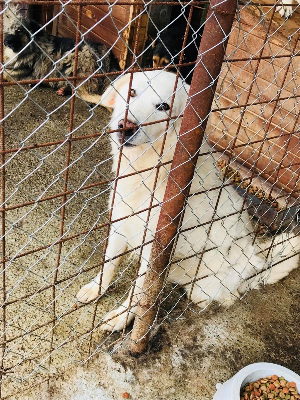 Tango et Foxtrot - mâle - refuge de Târgu Frumos - adoptés via Andreea 36278611