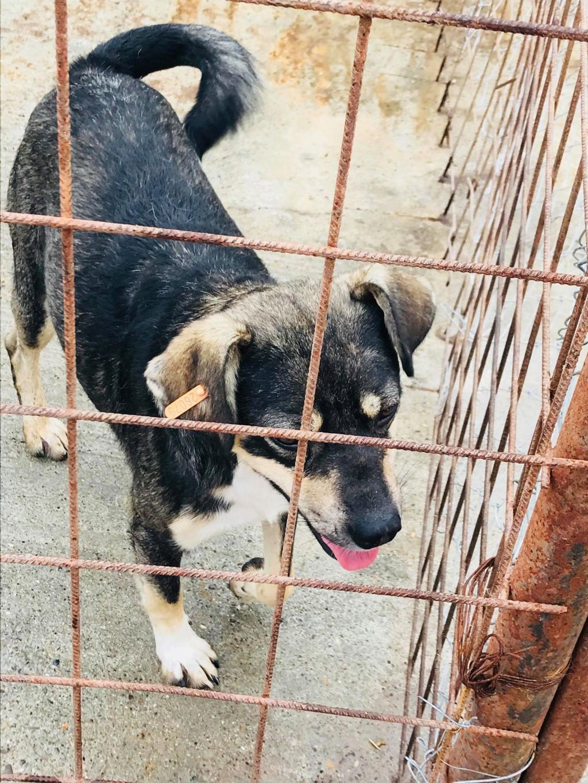 Gimli (ex-Jonny) - mâle - refuge de Târgu Frumos - réservé adoption (68) 36303010