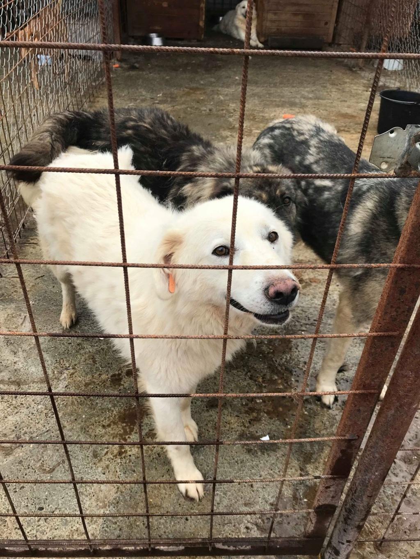 Tango et Foxtrot - mâle - refuge de Târgu Frumos - adoptés via Andreea 36307210