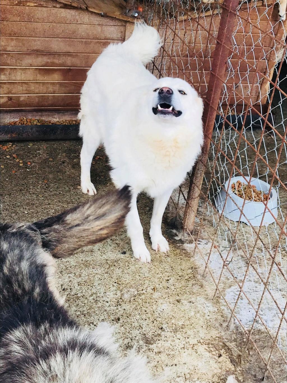 Tango et Foxtrot - mâle - refuge de Târgu Frumos - adoptés via Andreea 36316910