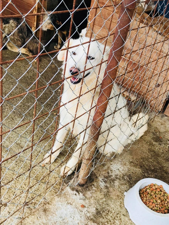 Tango et Foxtrot - mâle - refuge de Târgu Frumos - adoptés via Andreea 36320610