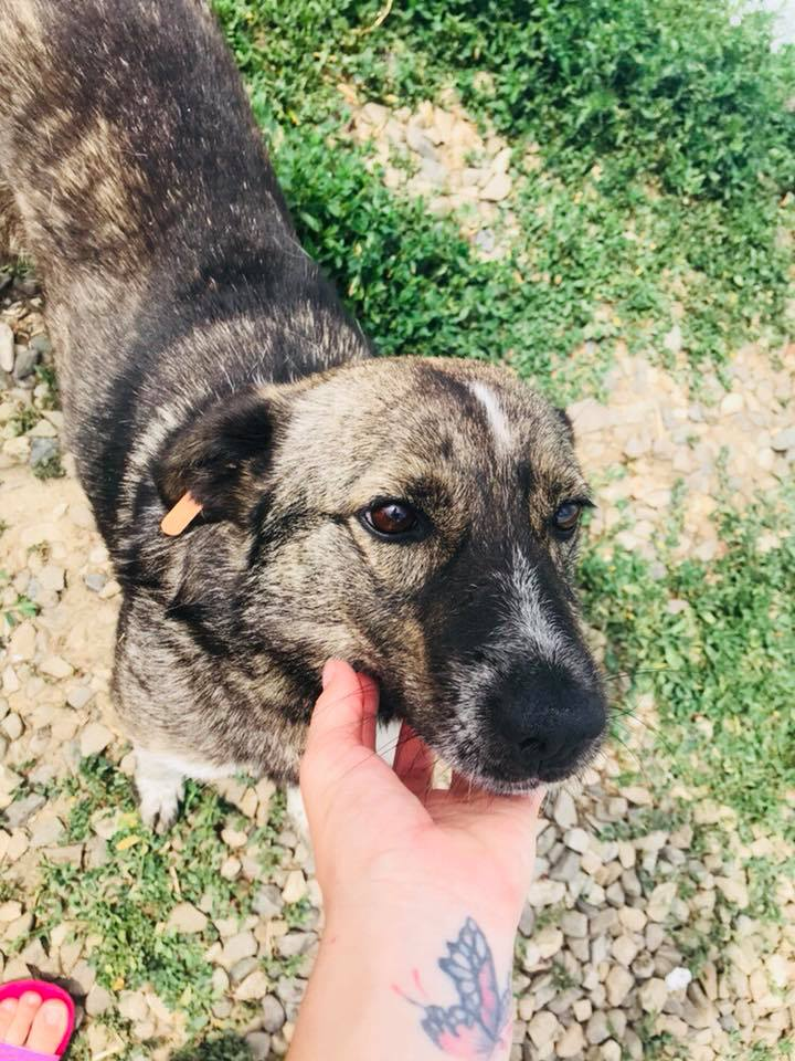 SCRATCH (ex-Toto) - mâle - refuge de Târgu Frumos réservé adoption 67 37562810