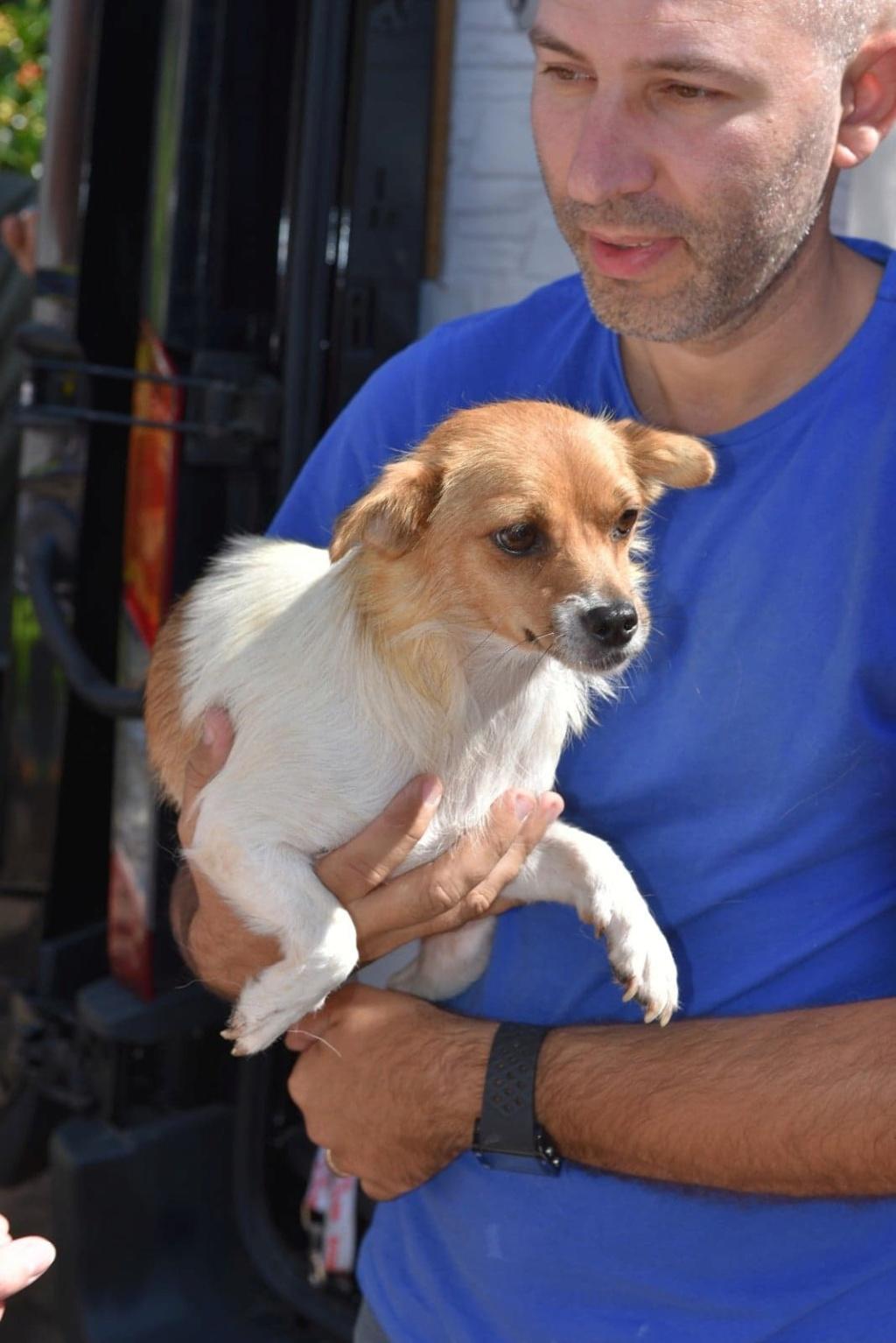 Ruby - femelle - en FA à Târgu Frumos - réservée adoption (33) 41286810