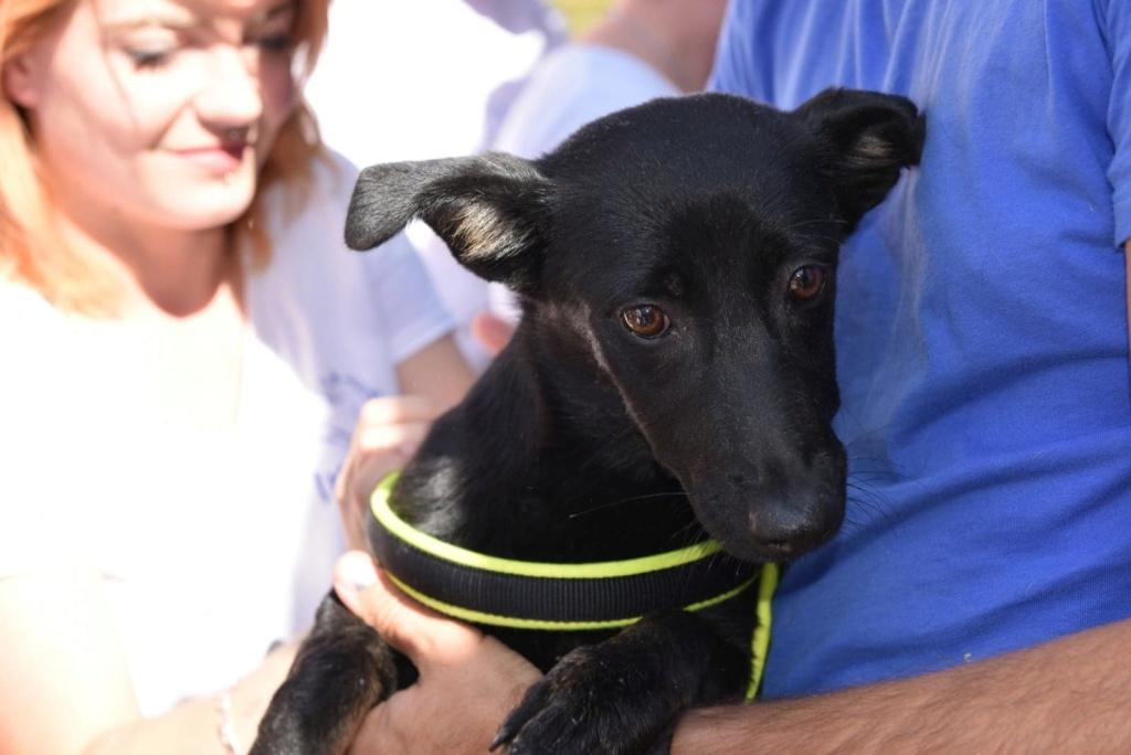 Lena - femelle - Târgu Frumos - réservée adoption (67) 41288910
