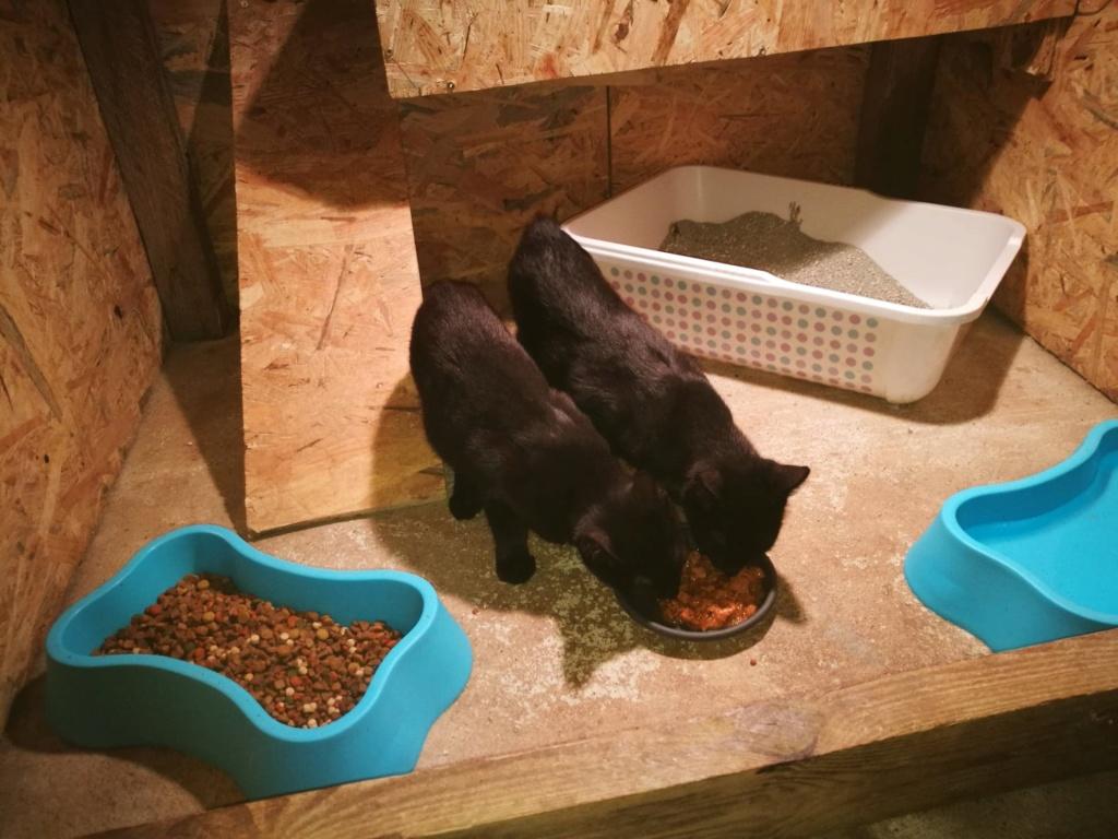 Bagherra - femelle - réservée adoption par sa FA (68) 41302511