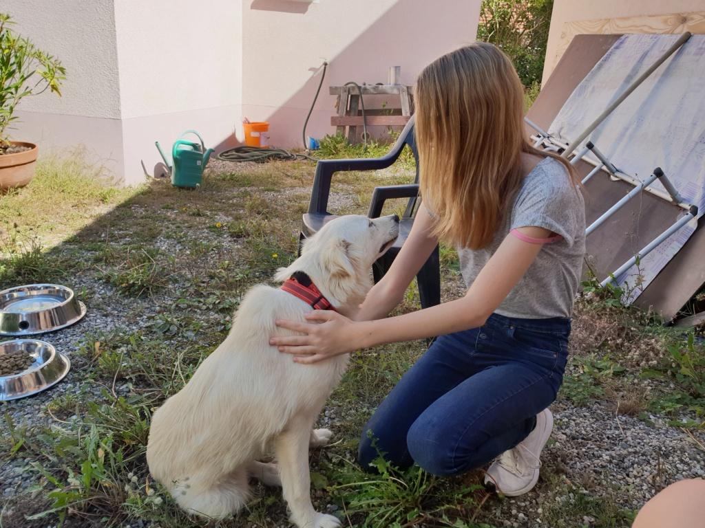 Stella - femelle - fourrière de Târgu Frumos - réservée adoption (68) 41365610