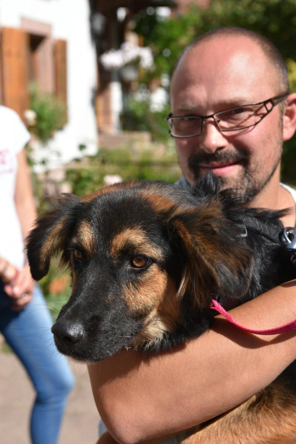 Galina - femelle -en FA à Târgu Frumos - réservée adoption (67)  41368510