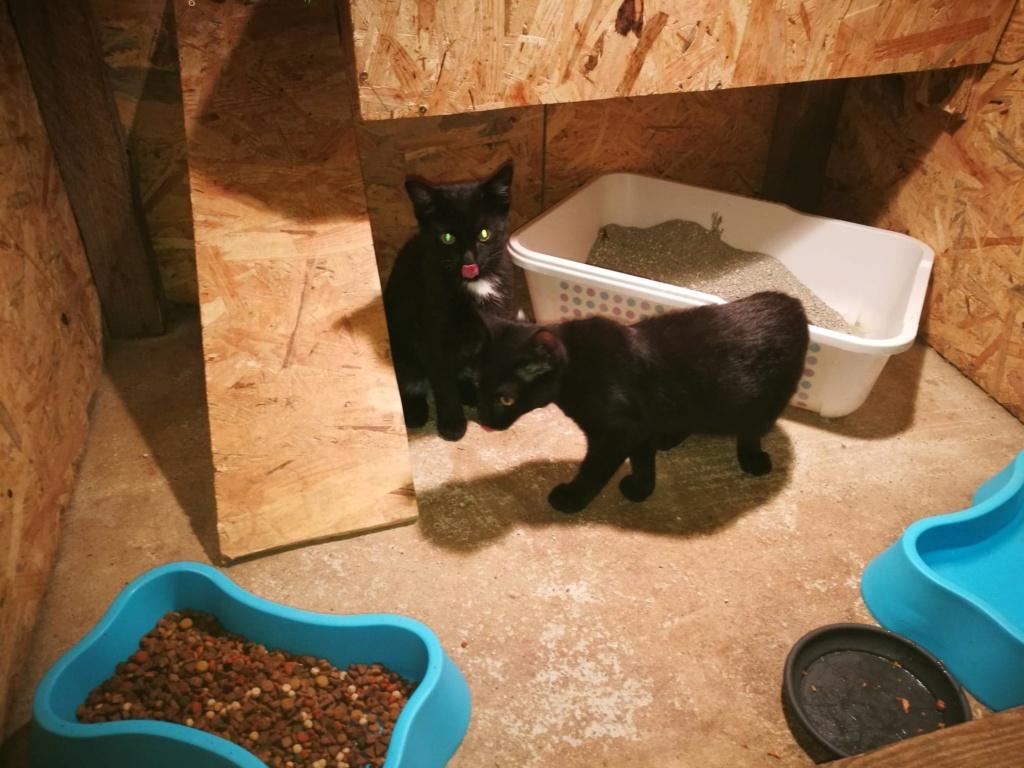 Bagherra - femelle - réservée adoption par sa FA (68) 41374811