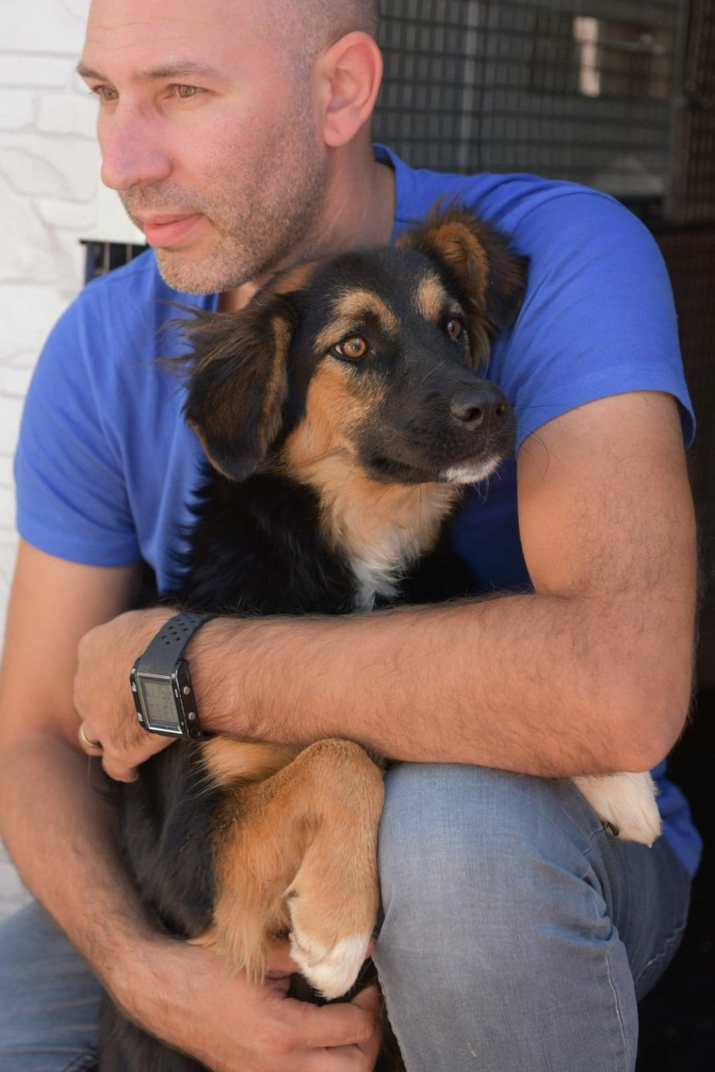 Galina - femelle -en FA à Târgu Frumos - réservée adoption (67)  41395010