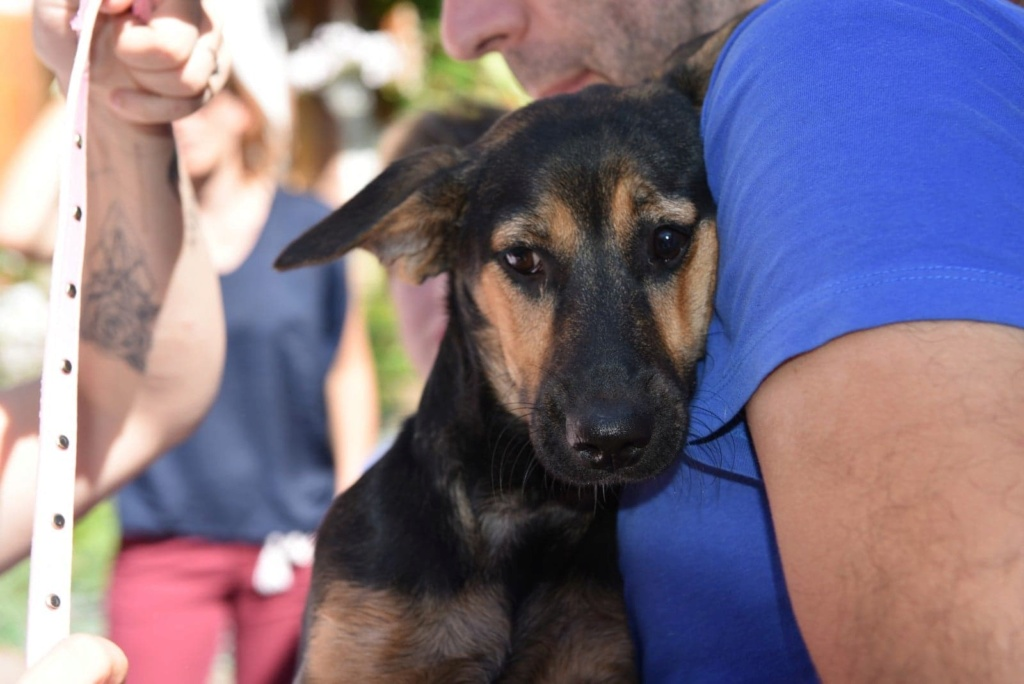 Etna - femelle - chez Andreea (Târgu Frumos) - reservé adoption 67 41396010
