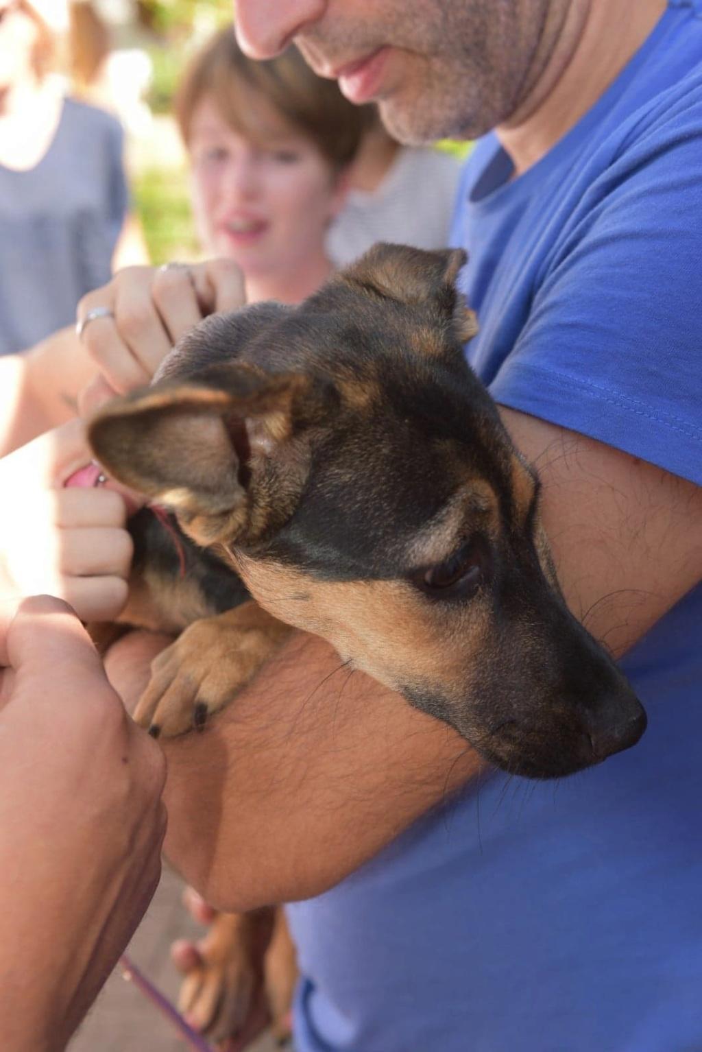 Etna - femelle - chez Andreea (Târgu Frumos) - reservé adoption 67 41399410