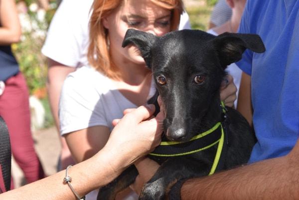 Lena - femelle - Târgu Frumos - réservée adoption (67) 41402910