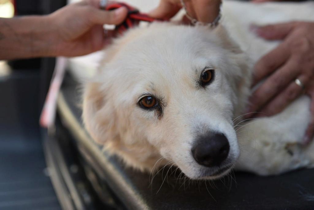 Stella - femelle - fourrière de Târgu Frumos - réservée adoption (68) 41403512
