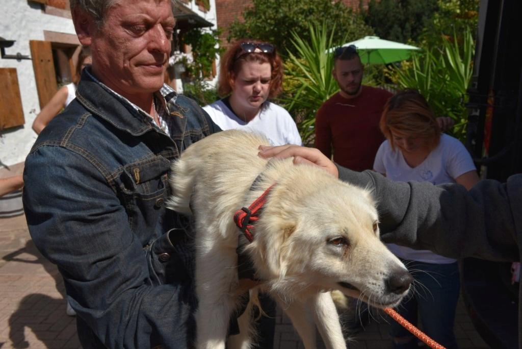 Stella - femelle - fourrière de Târgu Frumos - réservée adoption (68) 41416311