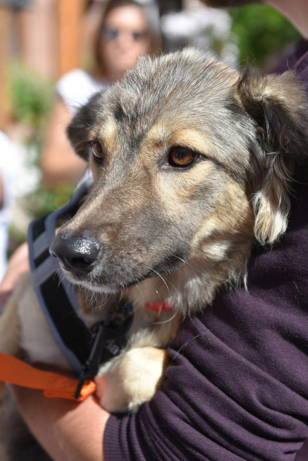Hizia (Bella chez Rudy) - femelle - chez Rudy (Iasi) - réservée adoption (67) 41430410
