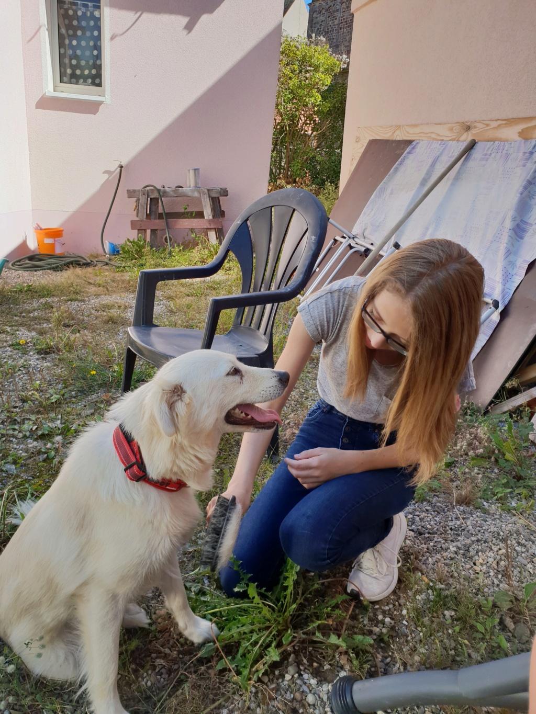 Stella - femelle - fourrière de Târgu Frumos - réservée adoption (68) 41432710