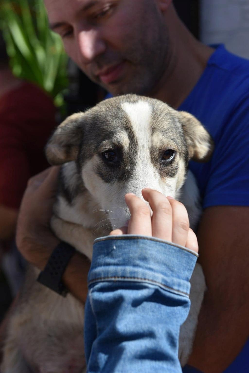 Charlotte - femelle - chez Andreea (Târgu Frumos) - réservée adoption (68) 41432810