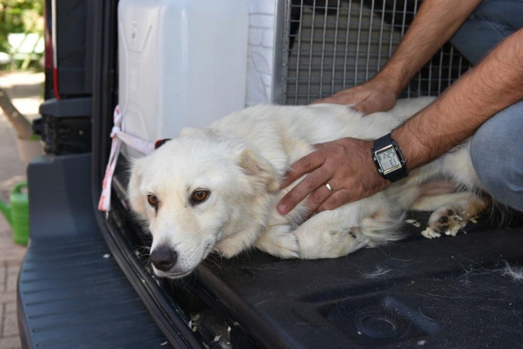 Stella - femelle - fourrière de Târgu Frumos - réservée adoption (68) 41437810