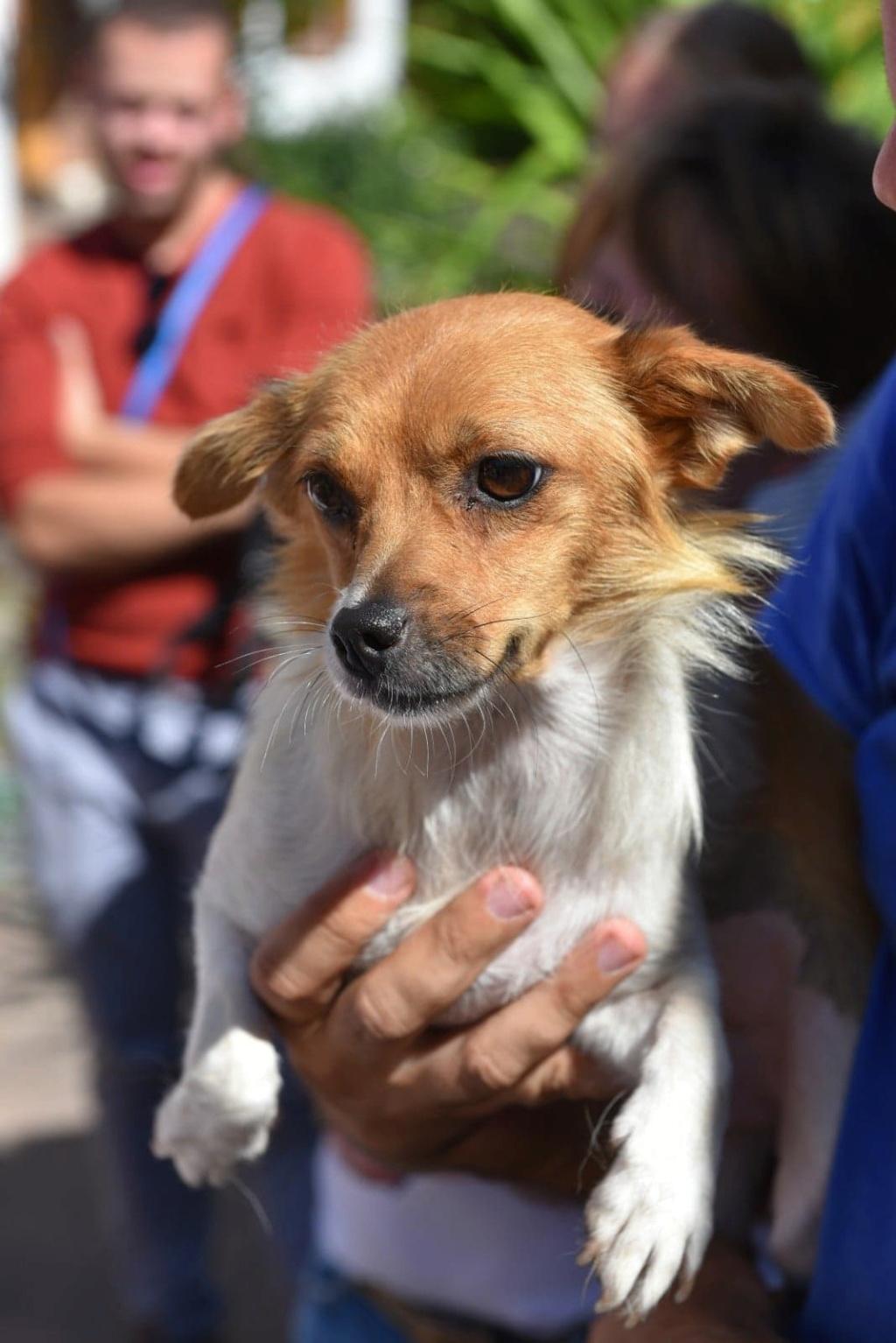 Ruby - femelle - en FA à Târgu Frumos - réservée adoption (33) 41443710