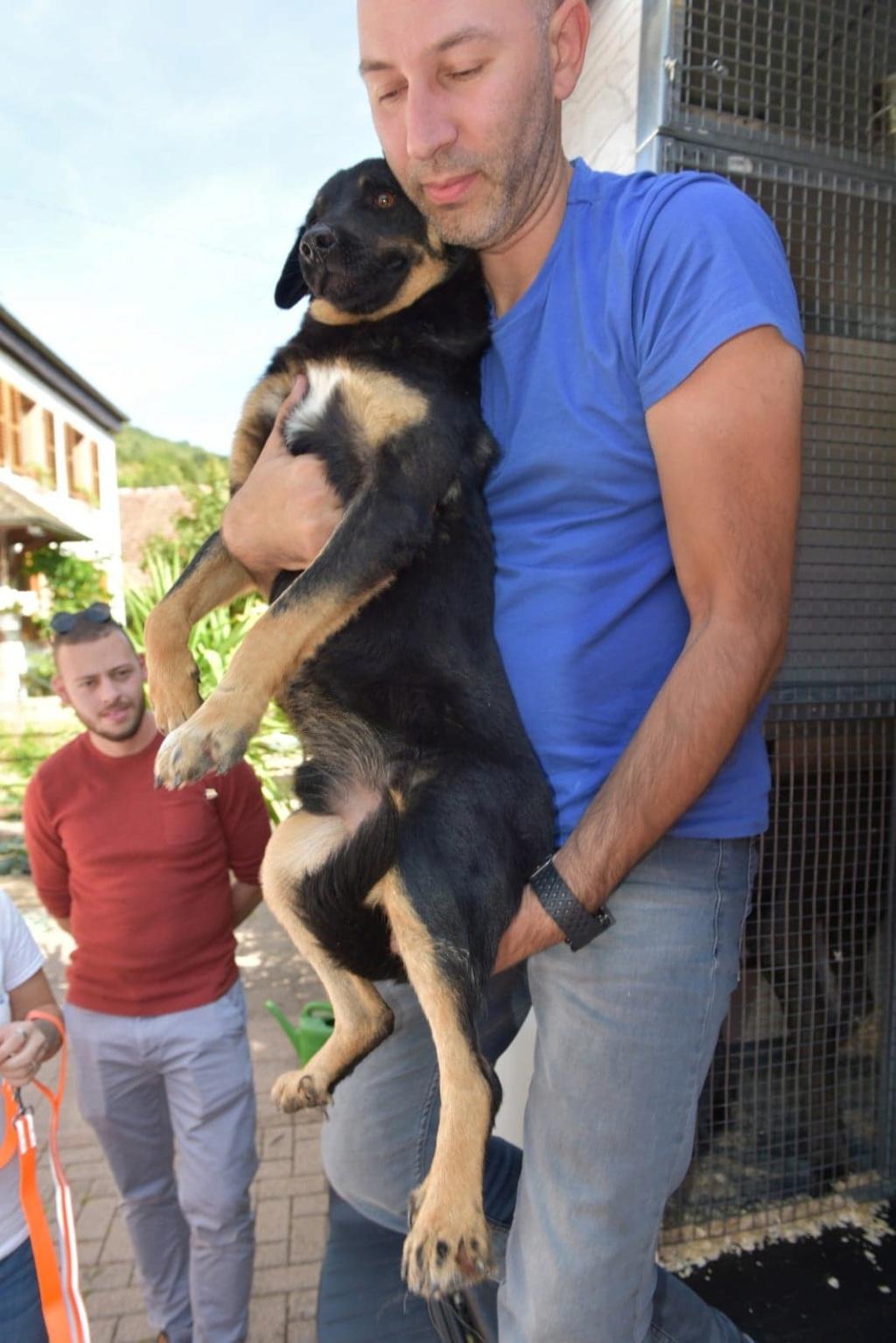 Blackjack - mâle - refuge de Târgu Frumos - réservé adoption (67) 41443910