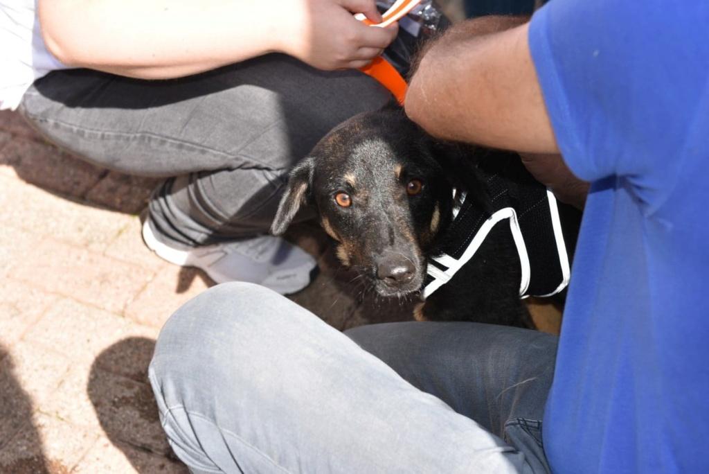Blackjack - mâle - refuge de Târgu Frumos - réservé adoption (67) 41462010