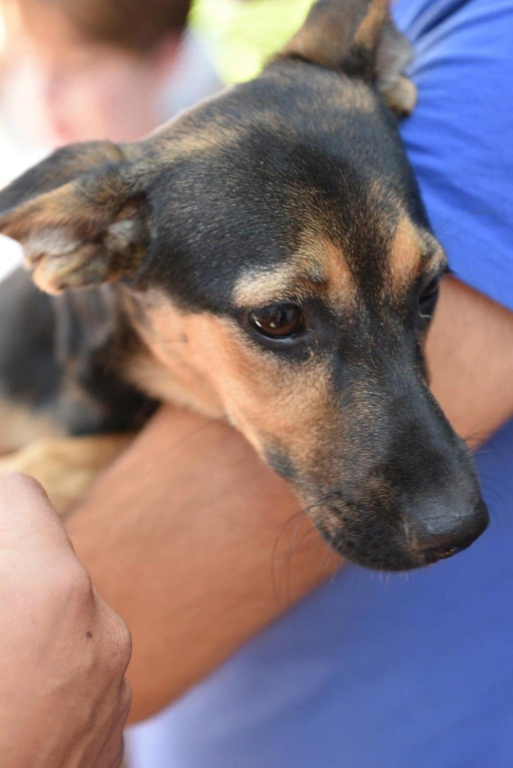 Etna - femelle - chez Andreea (Târgu Frumos) - reservé adoption 67 41466910