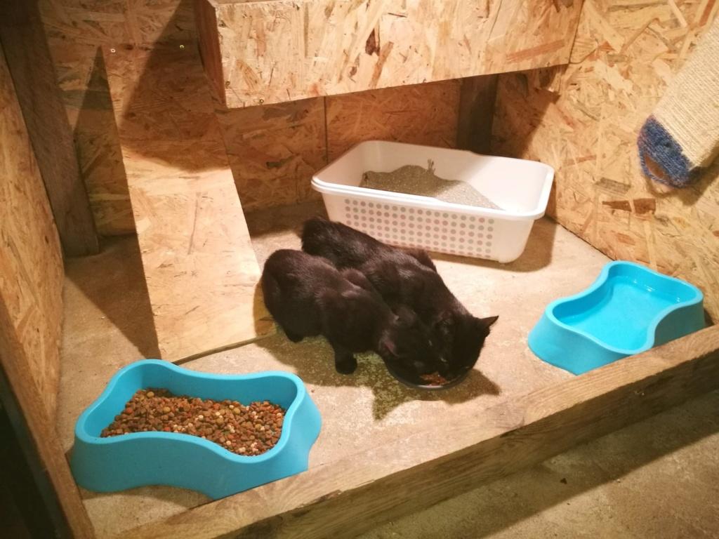 Bagherra - femelle - réservée adoption par sa FA (68) 41474511