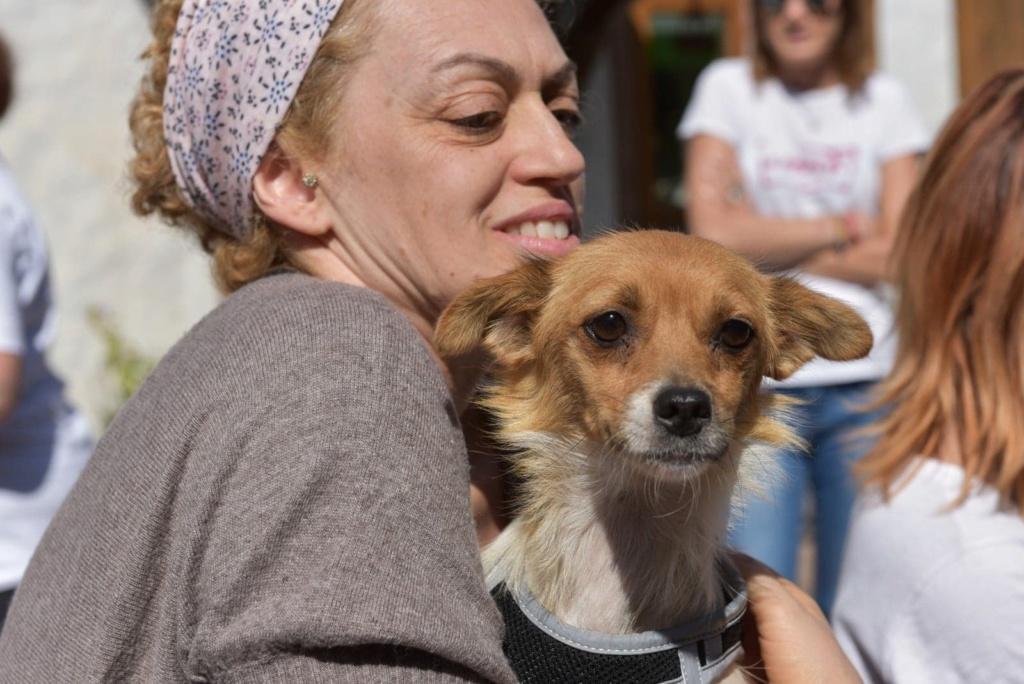 Ruby - femelle - en FA à Târgu Frumos - réservée adoption (33) 41475910