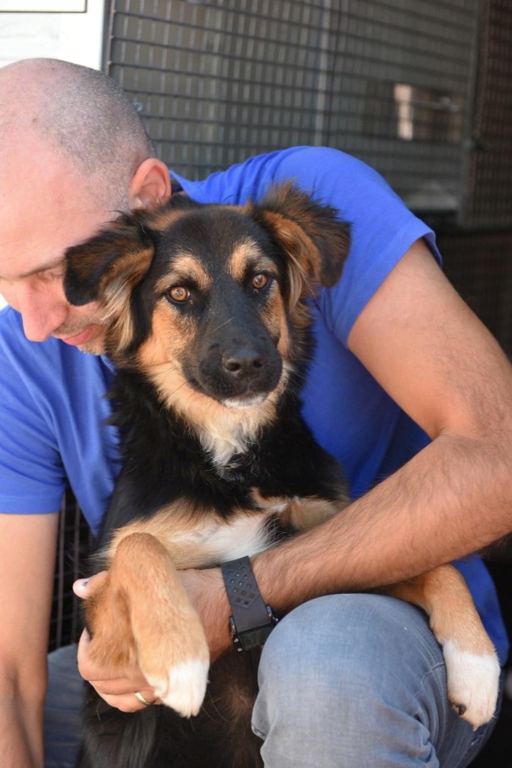 Galina - femelle -en FA à Târgu Frumos - réservée adoption (67)  41477510