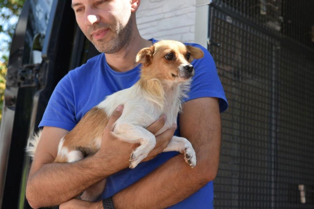 Ruby - femelle - en FA à Târgu Frumos - réservée adoption (33) 41486610