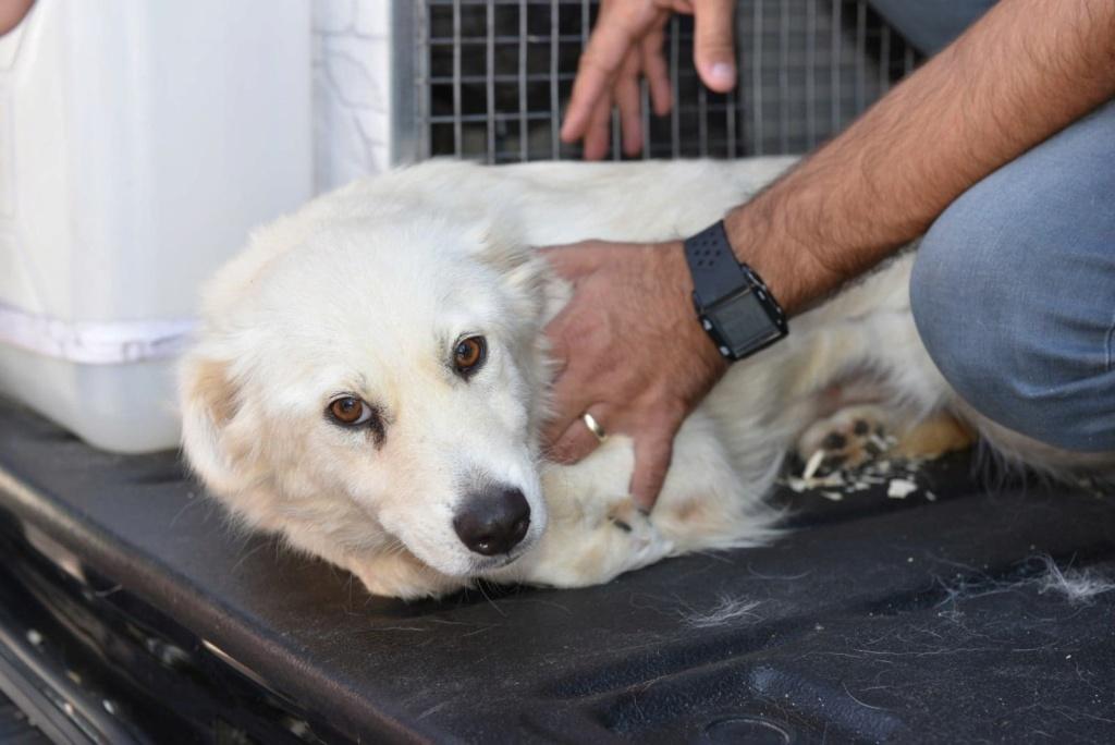Stella - femelle - fourrière de Târgu Frumos - réservée adoption (68) 41521010