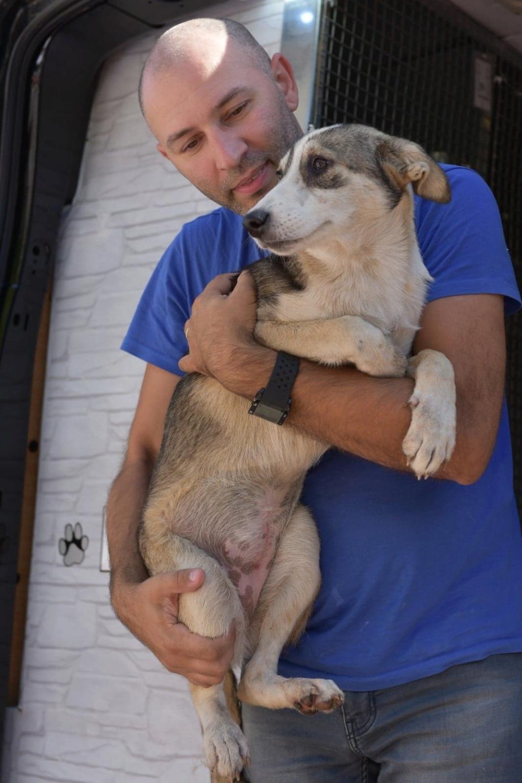 Charlotte - femelle - chez Andreea (Târgu Frumos) - réservée adoption (68) 41522410