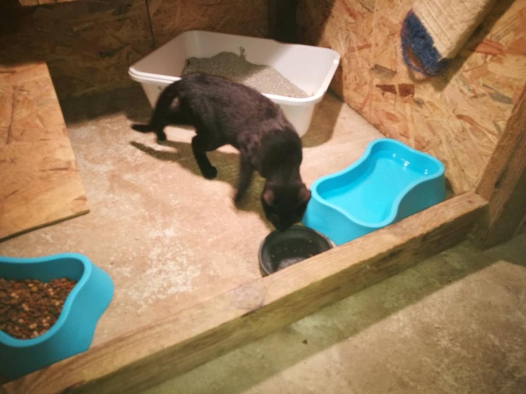 Bagherra - femelle - réservée adoption par sa FA (68) 41539612