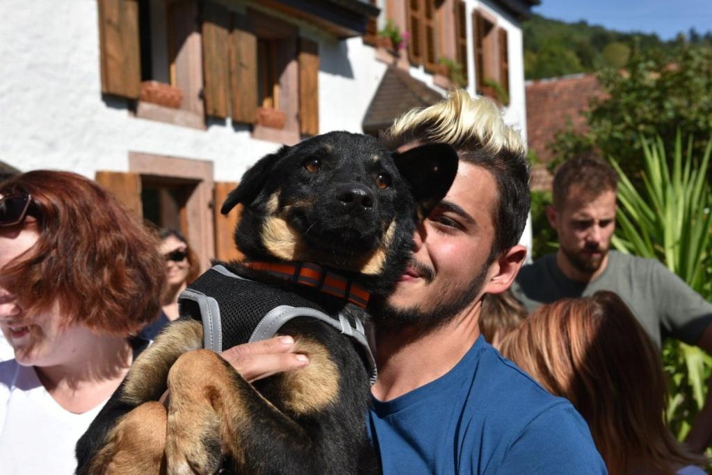 Blackjack - mâle - refuge de Târgu Frumos - réservé adoption (67) 41548410