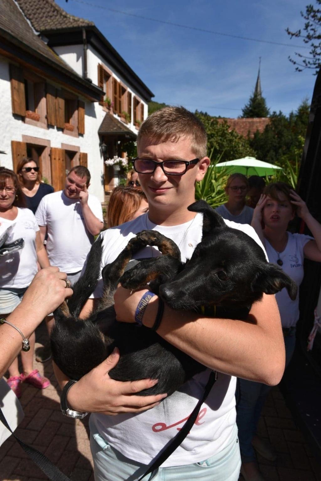 Lena - femelle - Târgu Frumos - réservée adoption (67) 41570810