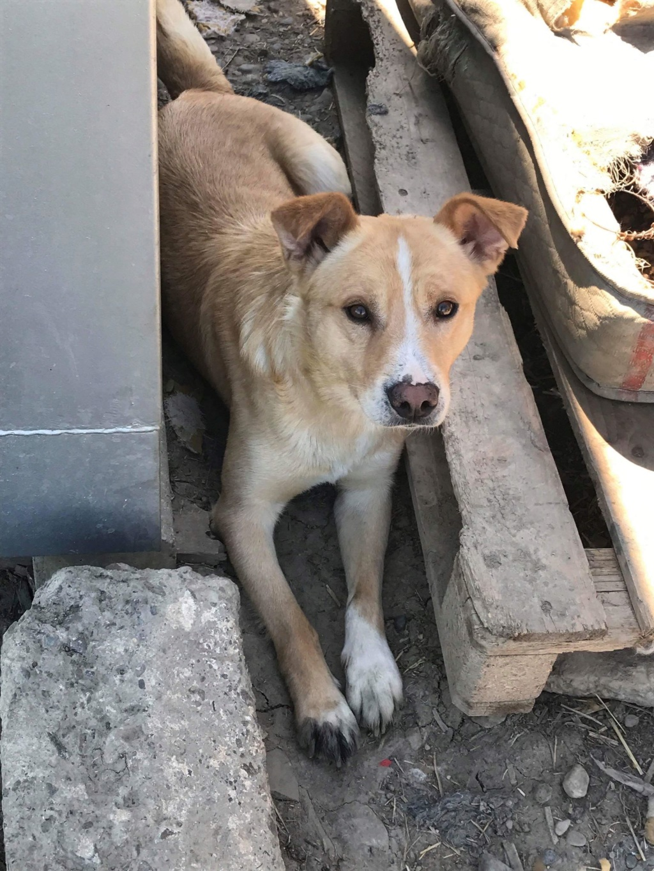 Karol - mâle - refuge Târgu Frumos - Réservé adoption par sa famille d'accueil (70) 41591310