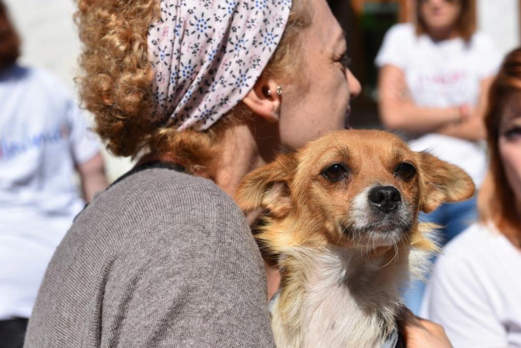 Ruby - femelle - en FA à Târgu Frumos - réservée adoption (33) 41603510