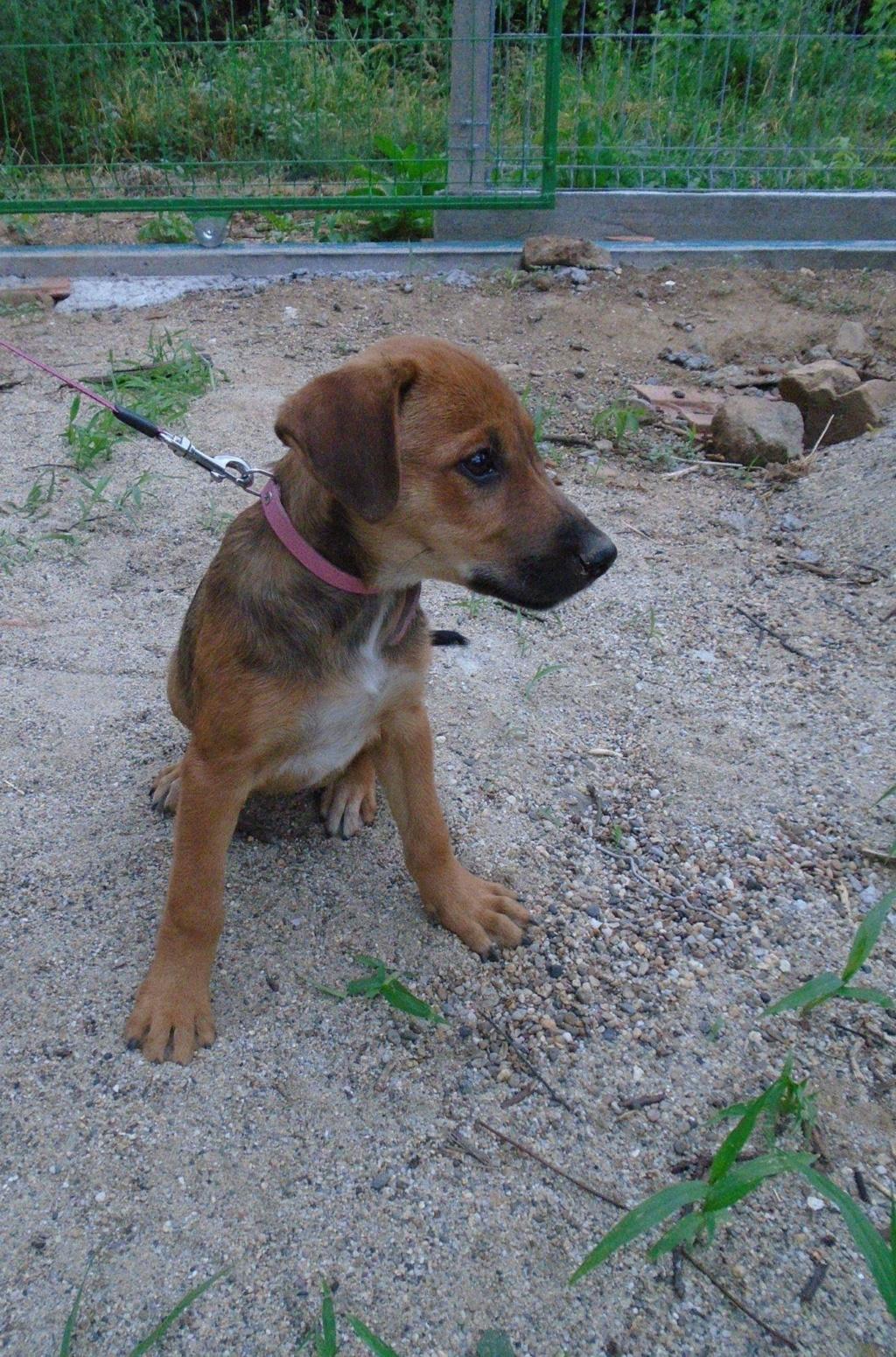Zora - femelle - refuge de Arad - réservée adoption (67) 41717110