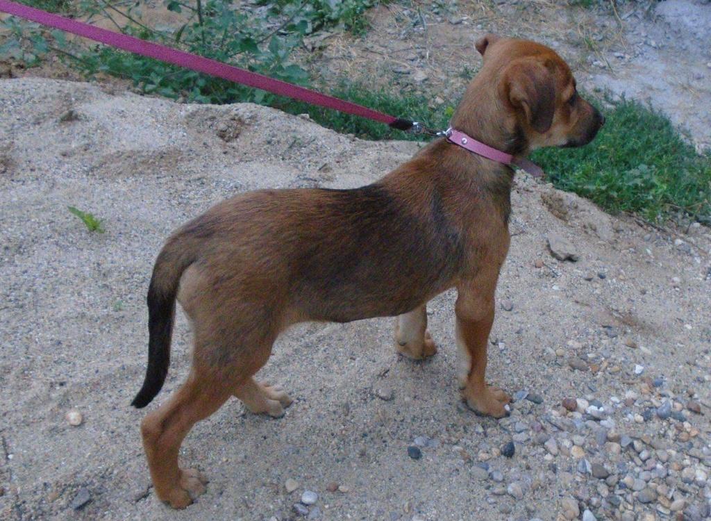 Zora - femelle - refuge de Arad - réservée adoption (67) 41739810