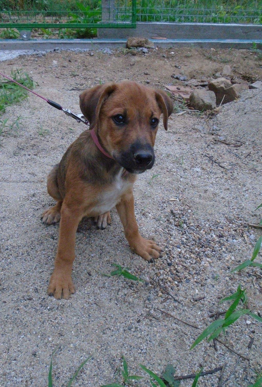 Zora - femelle - refuge de Arad - réservée adoption (67) 41761410