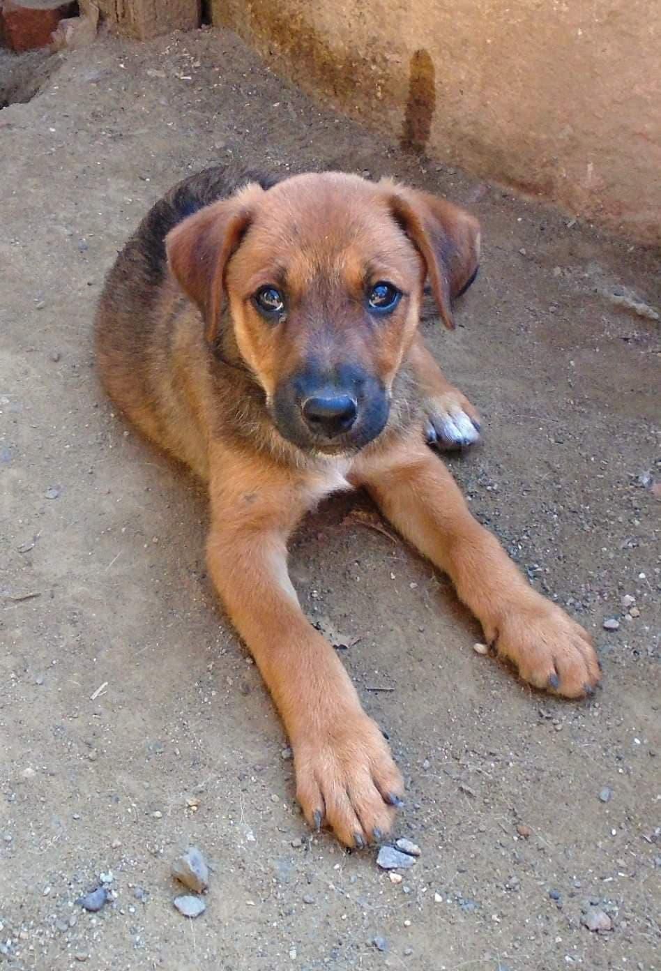 Zora - femelle - refuge de Arad - réservée adoption (67) 41779810