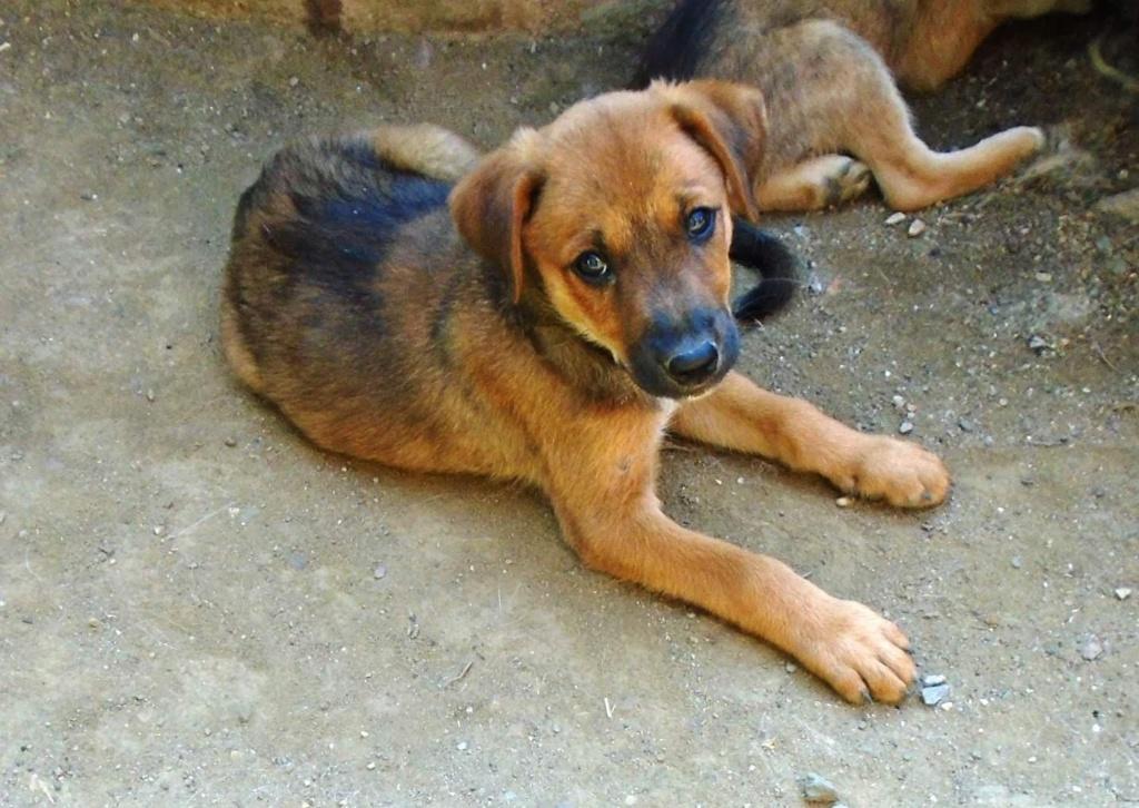 Zora - femelle - refuge de Arad - réservée adoption (67) 41827710