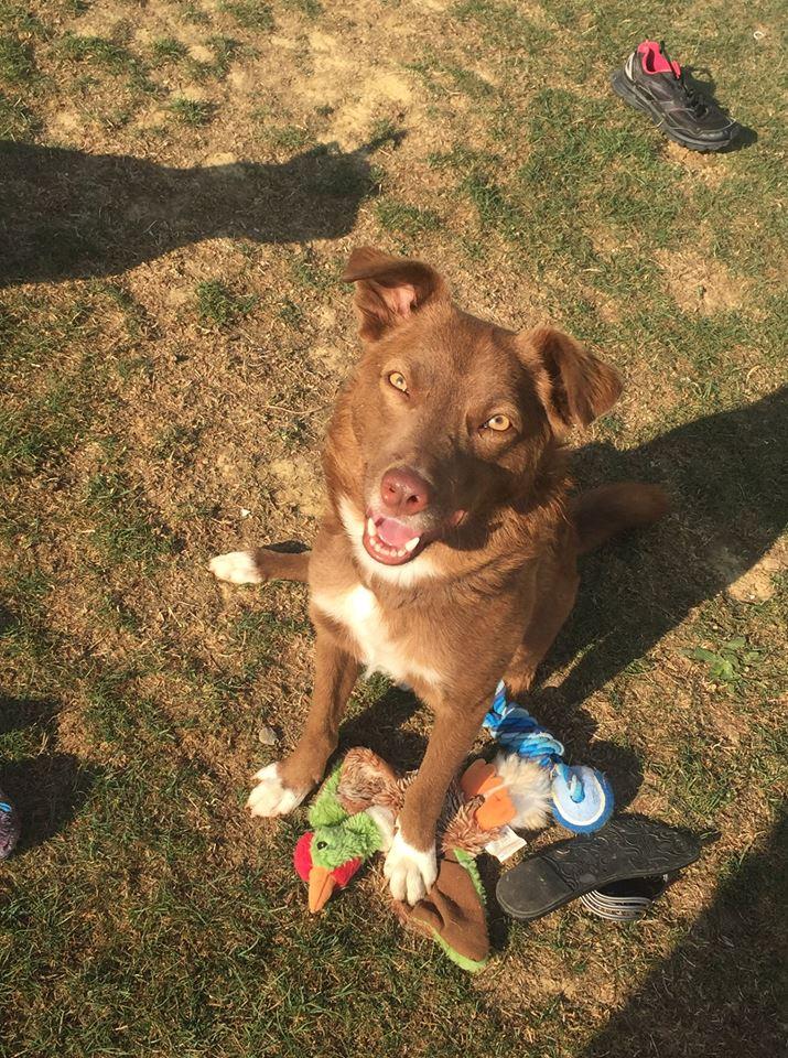 Lucky - mâle - Iasi - Réservé adoption (68)  42805411