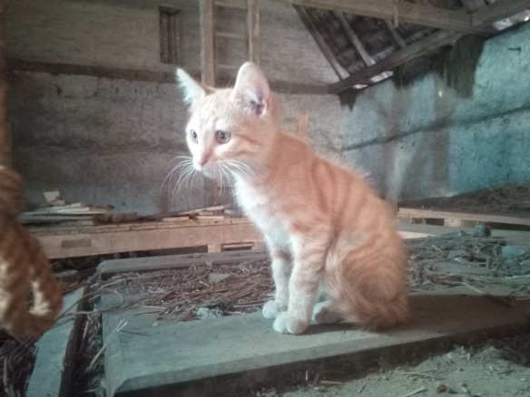 Mao (ex-Pixel) - Mâle chaton - en FA dans le 67 42deaf10