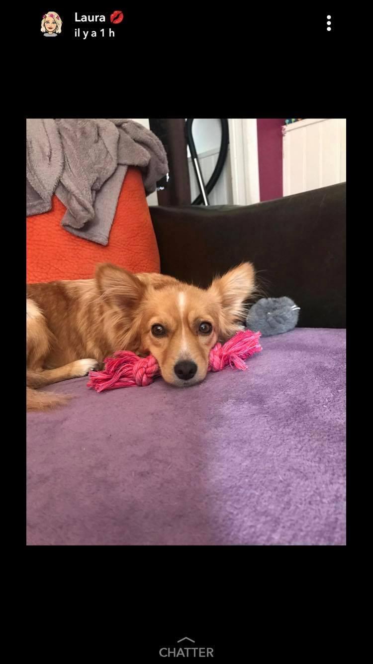 Valentina - femelle - chez Rudy (Iasi) - réservée adoption (68) 43315810