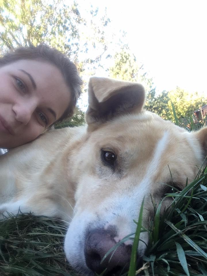Karol - mâle - refuge Târgu Frumos - Réservé adoption par sa famille d'accueil (70) 43879010