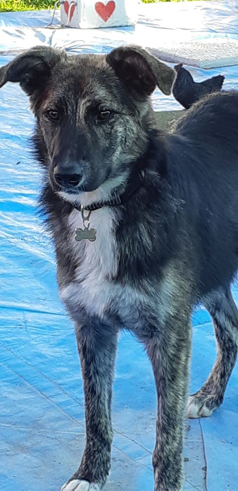 Kora - femelle - refuge de Arad - réservée adoption (68) 44023810