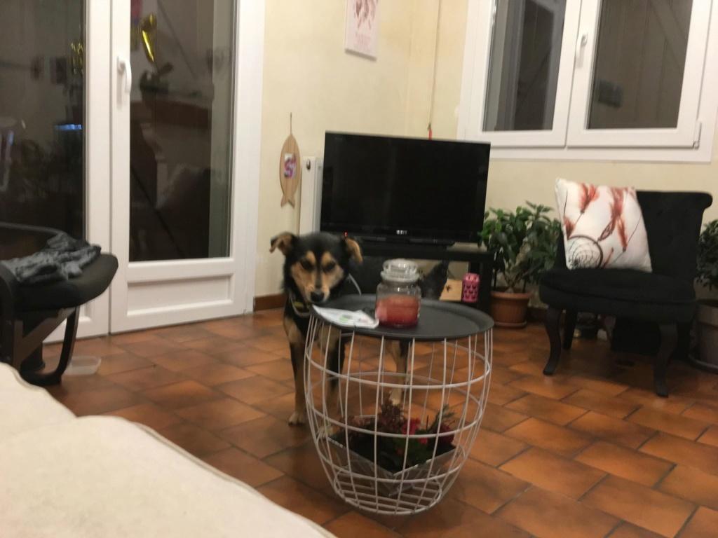 Nashka (ex-Nikita) - femelle - fourrière de Târgu Frumos - réservée adoption (80) 46096410